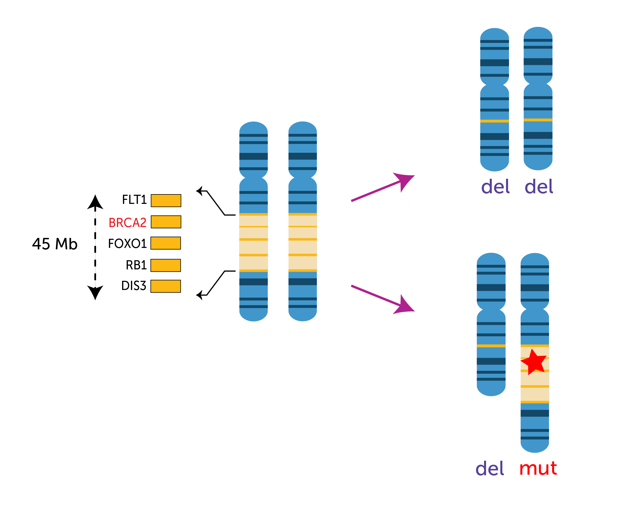 GeneRADAR_GeneDeletion